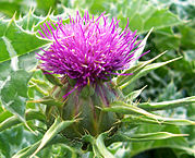 Fotografia: Fir0002  Licensed under CC BY-SA 3.0 via Wikimedia Commons